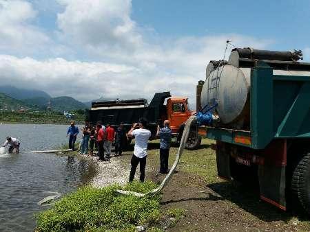 رهاسازی پنج میلیون قطعه ماهی سفید در رودخانه چلوند آستارا