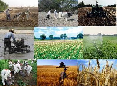 دولت یازدهم چگونه کشاورزی ایران را زنده کرد؟/از رشد تولیدات تا تأمین امنیت غذایی مردم