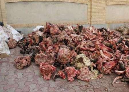 کشف حدود 2 تن گوشت فاسد در آستارا