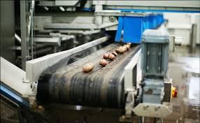 راه اندازی مجدد کارخانه فندقشکنی زیاز اشکور پس از 15 سال