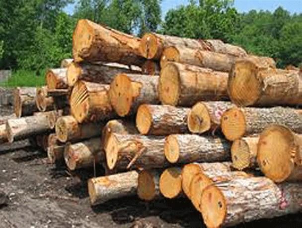 کشف ۴ تُن چوب قاچاق جنگلی در شهرستان شفت