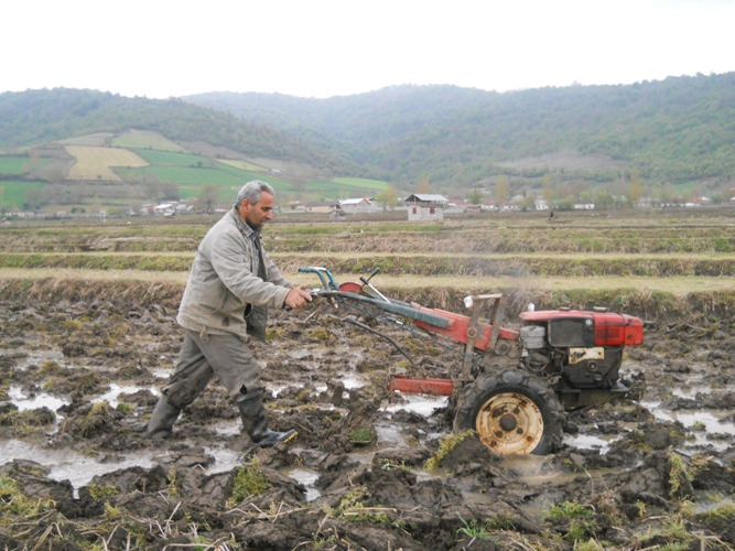 اجرای شخم زمستانه در بیش از 4 هزار هکتار از اراضی شالیکاری گیلان