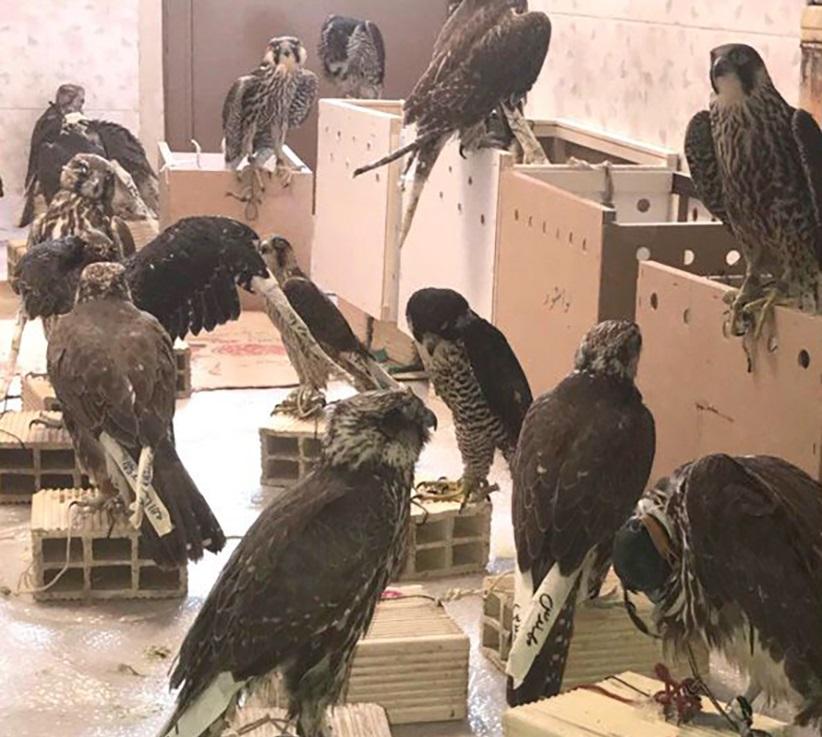 کشف بیش از 490 دام طی ماه گذشته در پارک ملی بوجاق/قاچاق پرندگان نادر به کشورهای حاشیه خلیج فارس