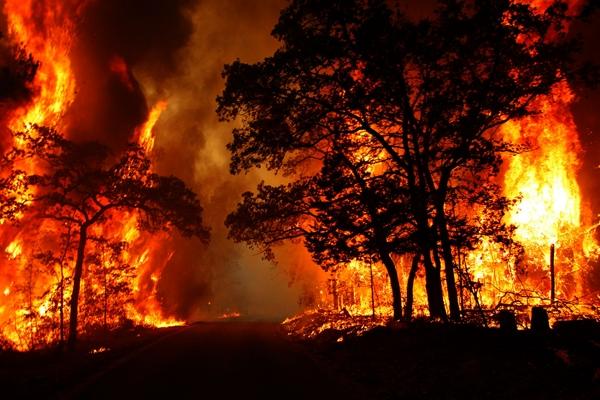 آتشسوزی در 8.5 هکتار از جنگلهای گیلان