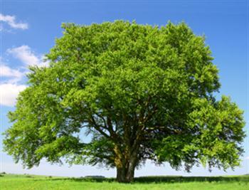 به جای اصول گرایان و اصلاح طلبان بنشانید درخت که هوا تازه شود