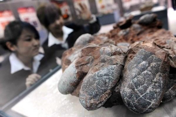 کشف ۳۰فسیل ۱۳۰میلیون ساله تخم دایناسور در چین