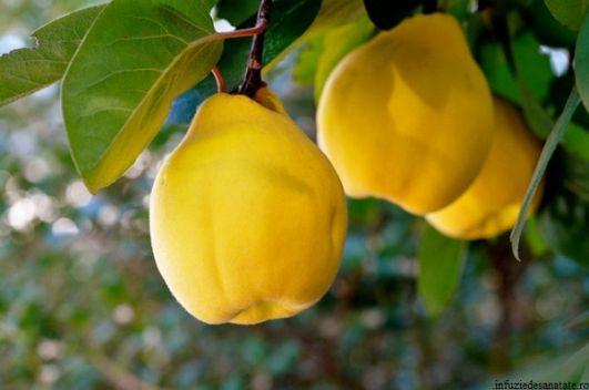 با خواص شگفت انگیز برگ درخت به آشنا شوید|از ضد عفونی کننده قوی تا باز کننده عروق