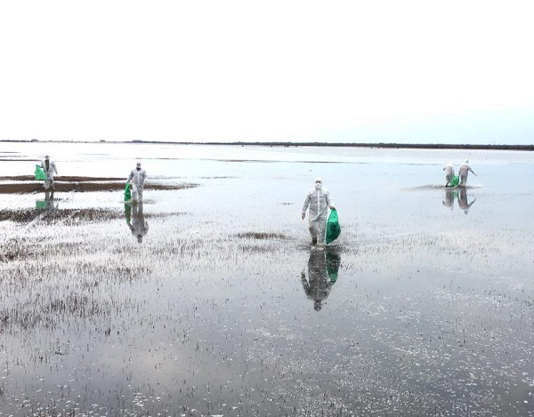 تلفات شدید پرندگان در پارک ملی بوجاق/دانه پاشی برای ماندگاری طیور آلوده به آنفلوآنزا