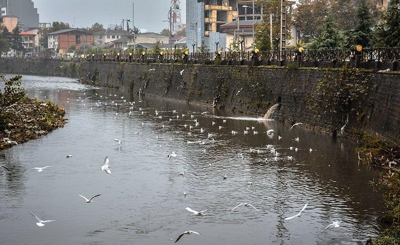 ۱۰ میلیون متر مکعب آب برای پاکسازی رودخانه های رشت رهاسازی می شود/ایجاد پارک و فضای سبز در اطراف رودخانه های رشت