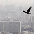 ارتقای وضعیت سیستم حمل و نقل نقل عمومی،راهکار کاهش آلودگی هوا