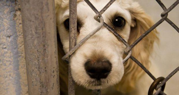 صدور حکم محکومیت یک حیوان آزار در شفت