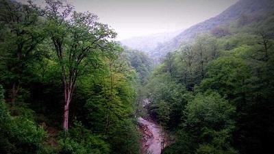 هزار و ۳۵۰ هکتار از جنگل های هیرکانی گیلان از ابتدای سال رفع تصرف شد