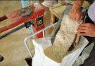 قیمت خرید توافقی برنج در گیلان اعلام شد/کشاورزان  در فروش محصول عجله نکنند
