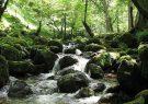جنگلهای هیرکانی گشت رودخان در انتظار ثبت جهانی