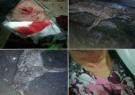حمله شغال به مادر و پسر در تالش | این حیوان با چماق کشته شد