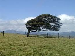 سرعت باد ۹۷ کیلومتری در گیلان