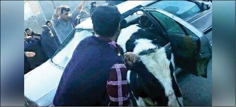 از کری خوانی پسر 7ساله ایرانی برای محمدصلاح تا سرقت گاو با پژو!