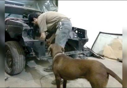 از سروصدای سگ تعمیرکار سیاهکلی در فضای مجازی تا عصبانیت مردم ایران از کوه خواری در لاهیجان و توطئه آمریکا برای آجیل نخریدن مردم!