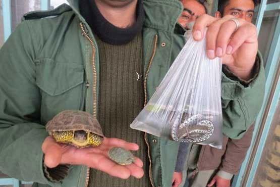 """ممنوعیت خرید و فروش """"لاکپشت"""" و """"مارآبی"""" در گیلان"""