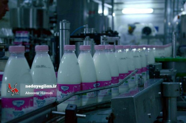 هیچ مشکلی بهداشتی در تولیدات غذایی گیلان نیست/شیر تولیدی کارخانجات استان از سلامت کامل برخوردار است/نباید گندم نامروغب در گیلان استفاده شود