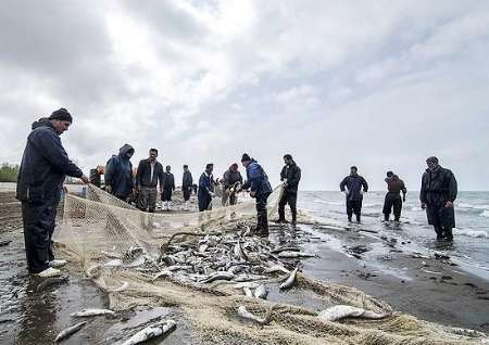 کاهش ۲۳ درصدی صید ماهی استخوانی در گیلان/برخی از صیادان موفق به صید ماهی نشده اند