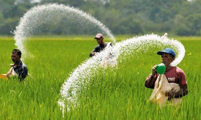قیمت کود و سم کشاورزی ۵ برابر شد/منتظر رویش ویلا در مزارع باشید!