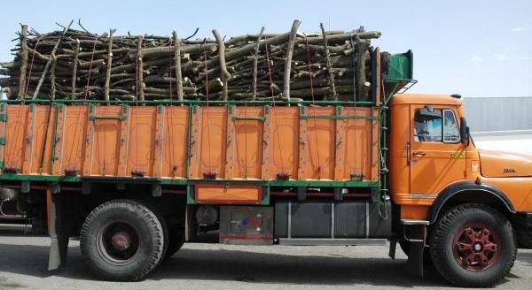 کشف ۳۱ تن چوب جنگلی قاچاق در گیلان
