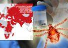 تب کریمه می تواند تا 70 درصد موارد موجب مرگ انسان شود/مردم گوشت را از مراکز مجاز خریداری کنند