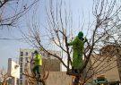 تدوین لایحه ضوابط سر برداری و انتقال درختان شهر رشت