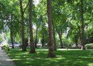 تلاش سازمان سیما، منظر و فضای سبز شهری شهرداری رشت در حفظ درختان شهری