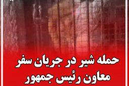 حمله شیر در جریان بازدید معاون رئیس جمهور از دهکده طبیعت قزوین
