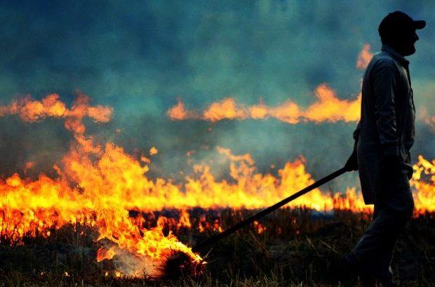 جریمه 8 میلیون تومانی در انتظار آتش زنندگان کاه و کلش