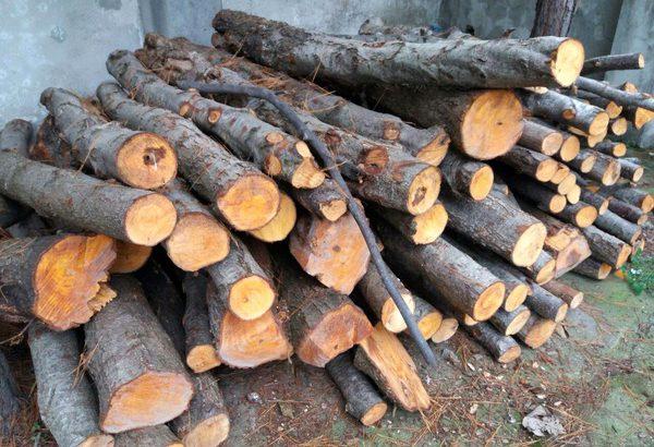 کشف پنج تن چوب جنگلی قاچاق در آستانه اشرفیه