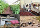 پرداخت 23 میلیارد تسهیلات اشتغال روستایی و عشایری در رودسر