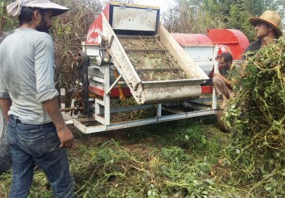 تولید و بکارگیری آزمایشی خرمنکوب پشت تراکتوری بادام زمینی