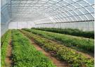 افزوده شدن  ۲۵ هکتار به سطح گلخانه های گیلان
