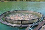 شناسایی ۱۲ پهنه آبی برای پرورش ماهی در قفس