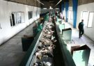 راه اندازی مجدد کارخانه کود آلی گیلان