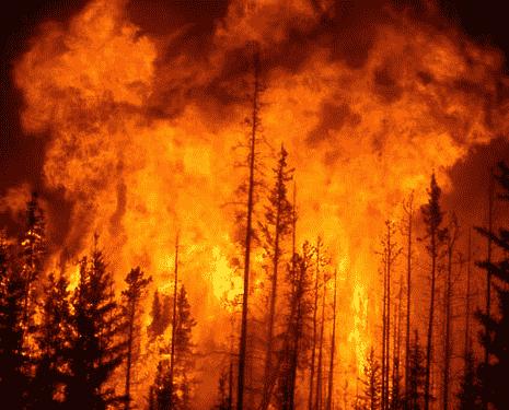۱۵ هکتار از جنگل های ماسوله دچار آتش سوزی شد/به پوشش جنگل آسیبی نرسیده است