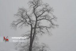 گزارش تصویری سفید شدن ارتفاعات ماسال با بارش برف بهاری