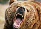 واکنش اداره محیط زیست به کشته شدن خرس مهاجم در فومن