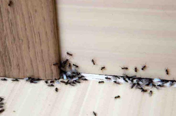راه حل های قطعی برای رهایی از دست حشرات خانگی/مورچه ها و مگس ها را برای همیشه از منزل خود بیرون کنید!