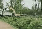 """ماجرای ویدئوی """"قتل عام درختان جنگلی گیلان"""" چیست؟"""