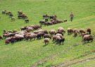 مراتع و جنگل های گیلان باید به دامداران واگذار شود/لزوم جلوگیری از هرگونه تغییر کاربری اراضی و تعیین مستثنیات در استان