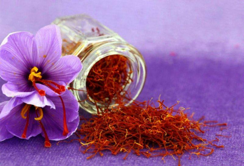 برداشت بیش از ۶۷ کیلوگرم زعفران در گیلان