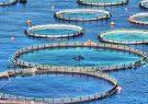 پیش بینی تولید نزدیک به یک هزار تن ماهی از طریق پرورش در قفس های دریایی