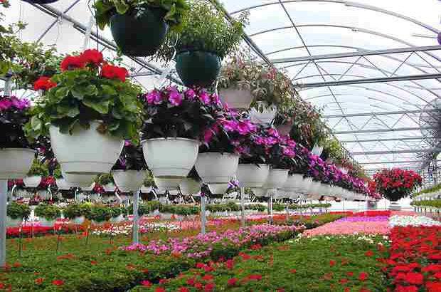 تولید سالانه ۱۲ میلیون انواع گل و گیاه زینتی در استان گیلان