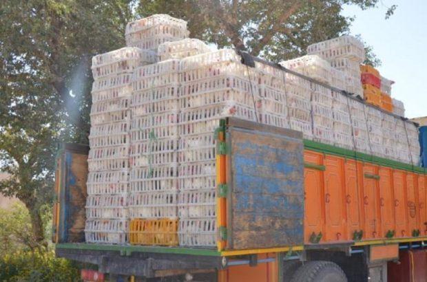 ممانعت از خروج ۱۱۰۰ قطعه مرغ زنده بدون مجوز از رودبار