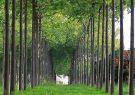 ۲۰۰۰ هکتار از اراضی گیلان سال آینده برای زراعت چوب اختصاص می یابد