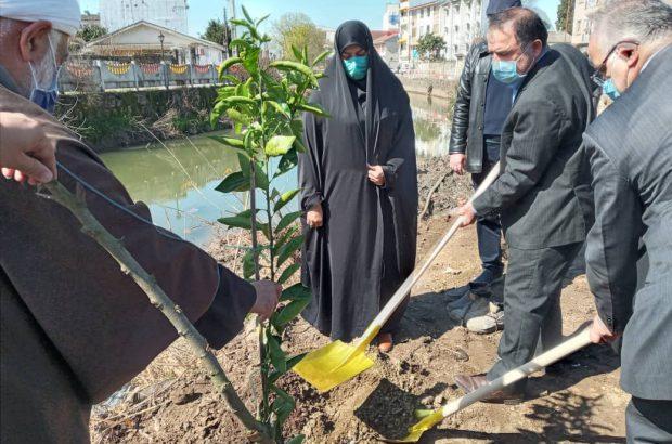 کاشت نهال توسط رییس اداره آموزش و پرورش شهرستان خمام در مراسم بزرگداشت درختکاری
